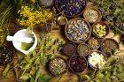 léčivé rostliny, bylinky, alternativní medicína, léčitelství, ilustrační foto