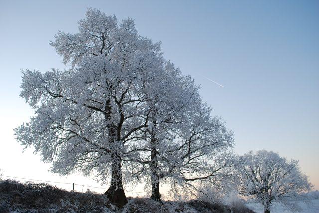 příroda v zimě, stromy, mráz, zima