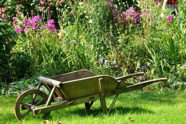 Zahrada  (ilustrační foto) | foto: Fotobanka Pixabay