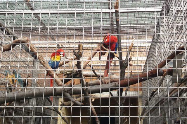 V listopadu čeká ptáky přesun do zimní části zahrady
