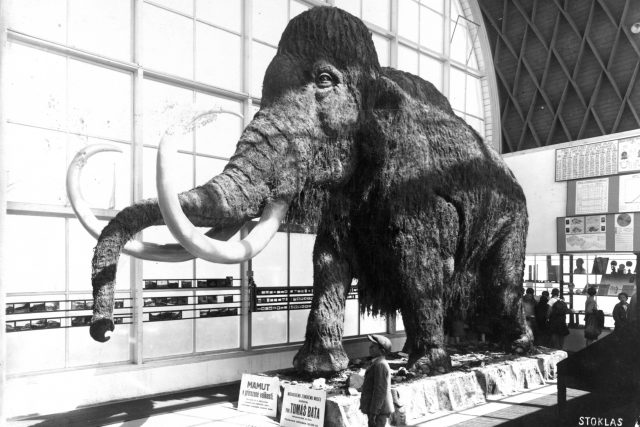 Pohled do hlavní haly Pavilonu Člověk a jeho rod s modelem mamuta | foto: archiv Ústavu Anthropos MZM
