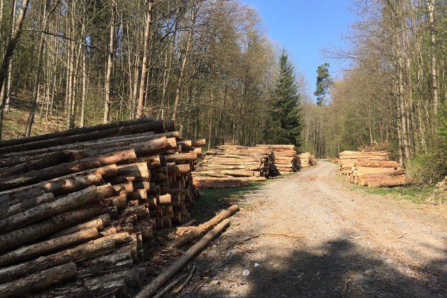 V lesích na jihu Moravy se hromadí vytěžené dříví | foto: Tomáš Kremr,  Český rozhlas