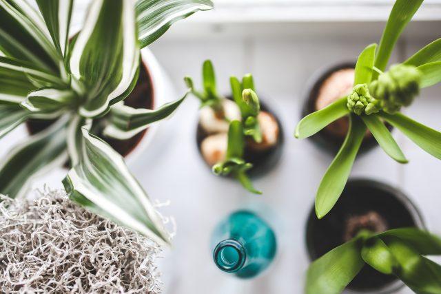 Pokojové rostliny  (ilustrační foto) | foto: Fotobanka Pixabay
