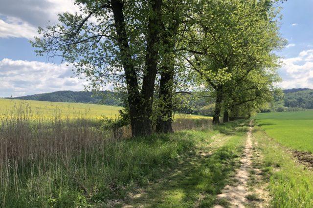 Pravý břeh Knínického potoka