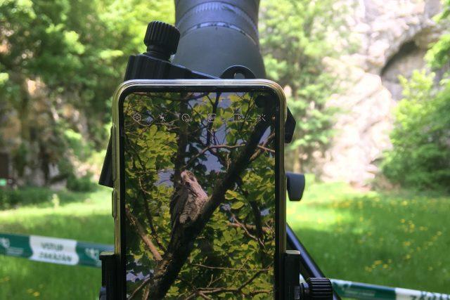 Monitoring sokolů v okolí Býčí skály v Moravském krasu