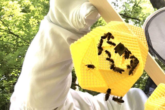 Včely pracují na výrobě designového svítidla   foto: Lucie Fürstová,  Český rozhlas